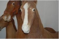 标本----马